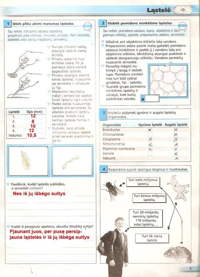 Peržiūrėti puslapį 2