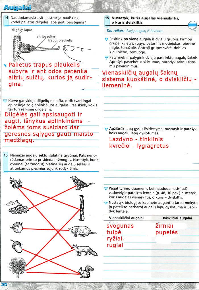 Biologija, Biologija 8