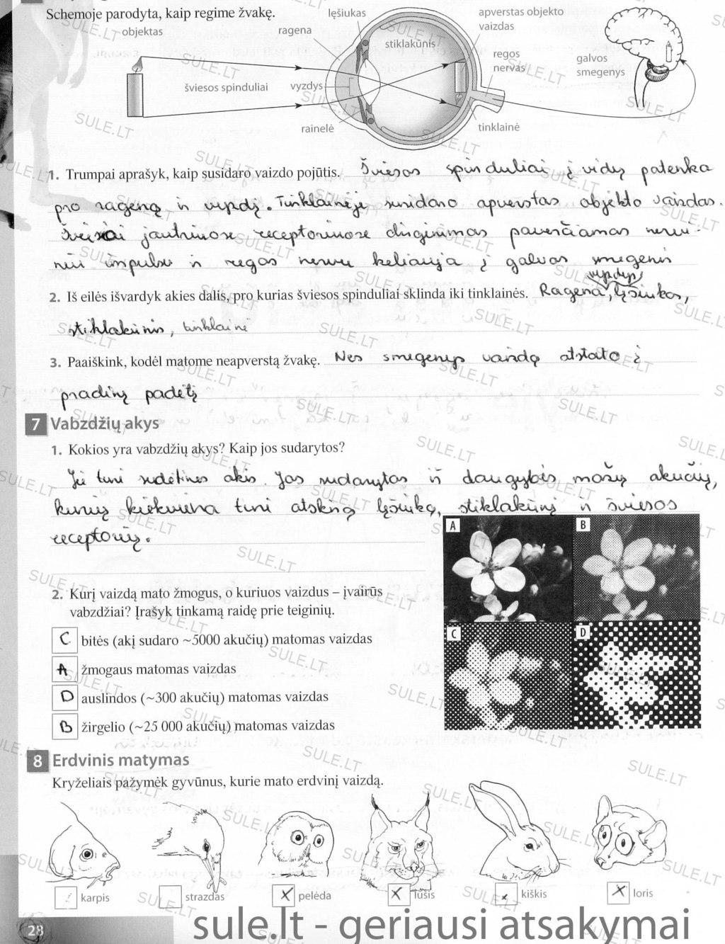 Peržiūrėti puslapį 29