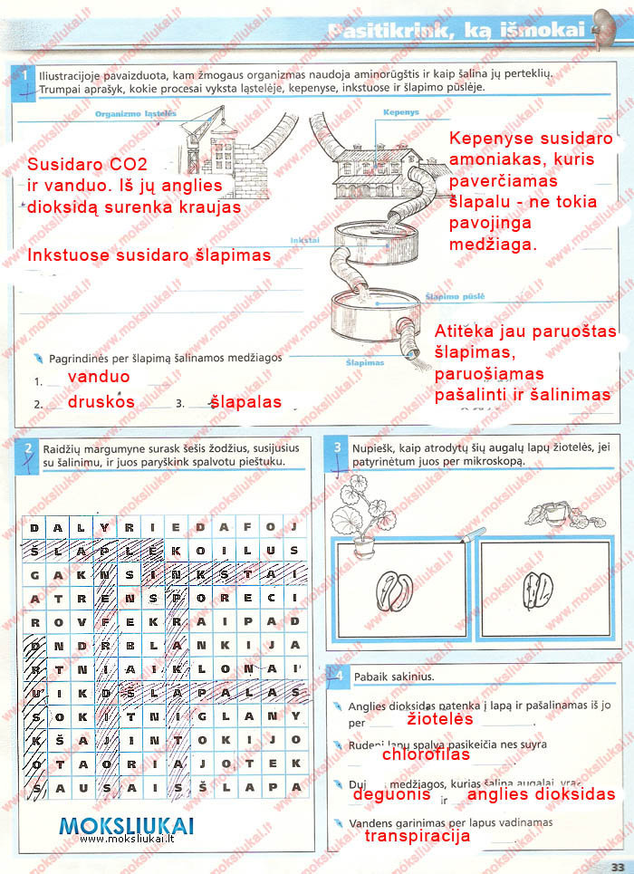 7 klase, Biologija 7 pratybos