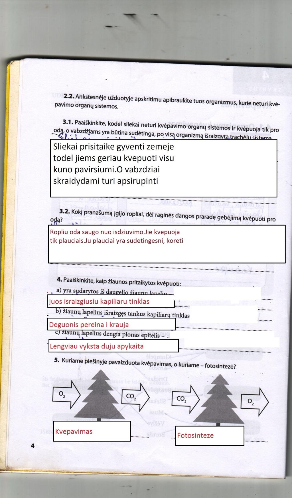 Peržiūrėti puslapį 3