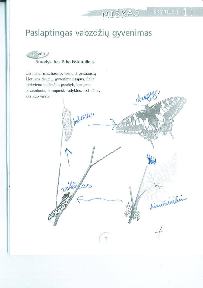 5 klasė Gamta ir žmogus - 1 dalis